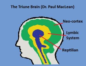 Triune-Brain1-McClean
